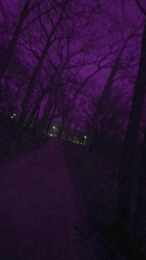 View of purple night sky through silhouettes of trees. Photo taken by the author.