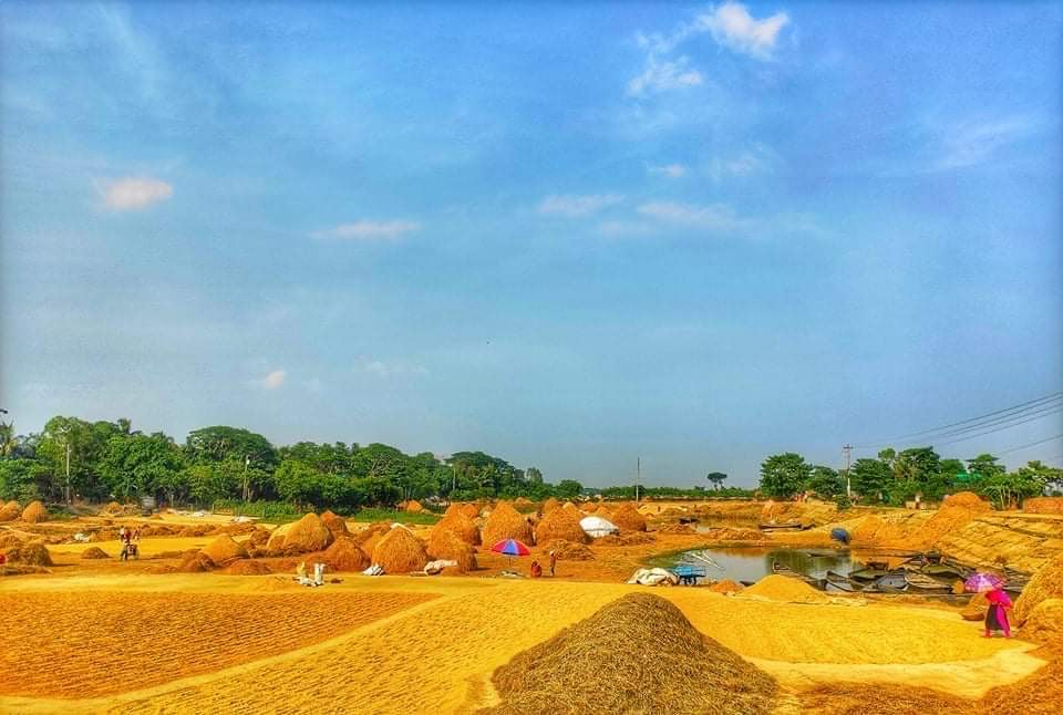 Photo of the author's village in Bangladesh. Photo courtesy of the author.
