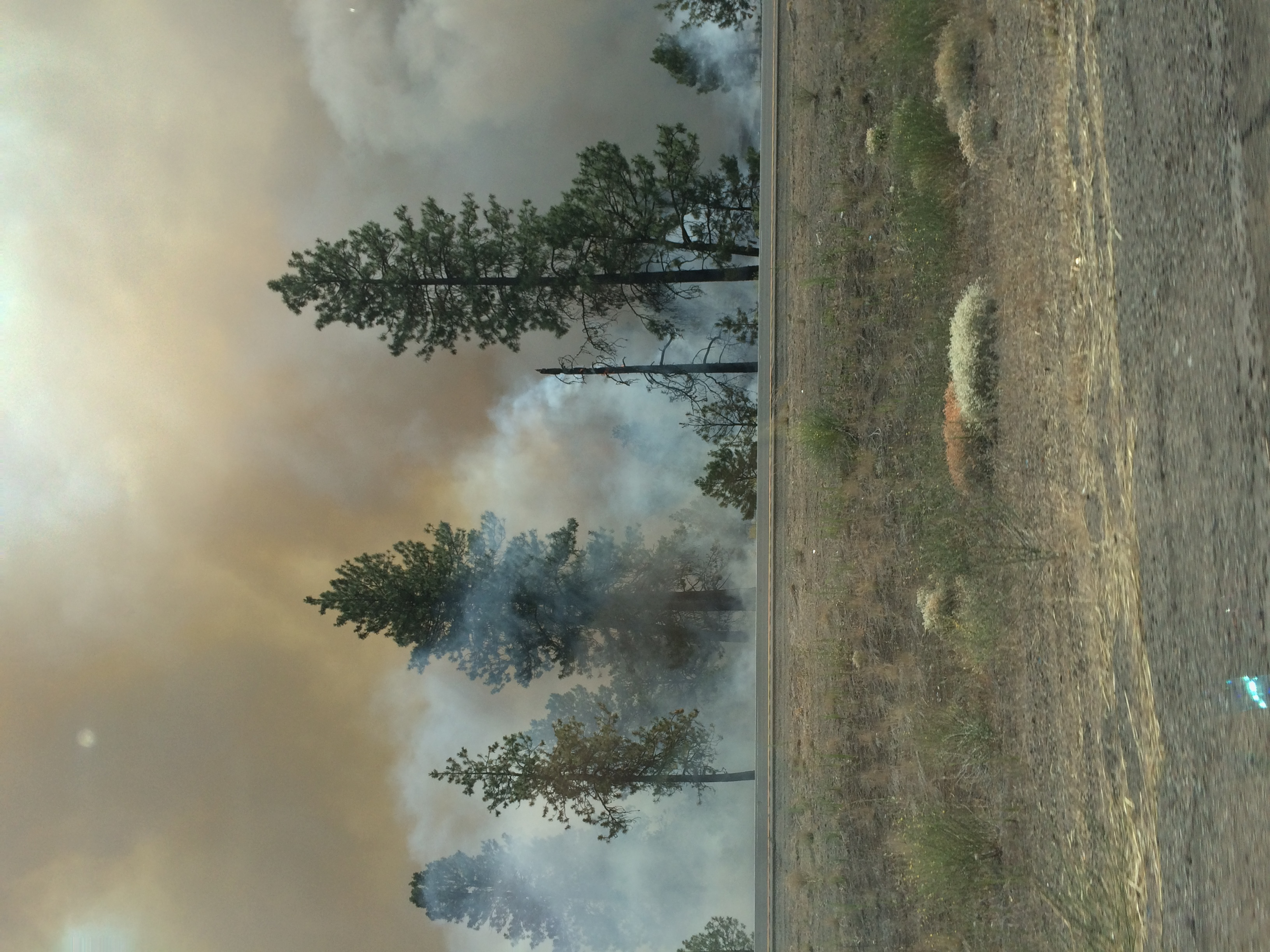 Photo of trees covered in smoke caused by a fire. Photo courtesy of the author.