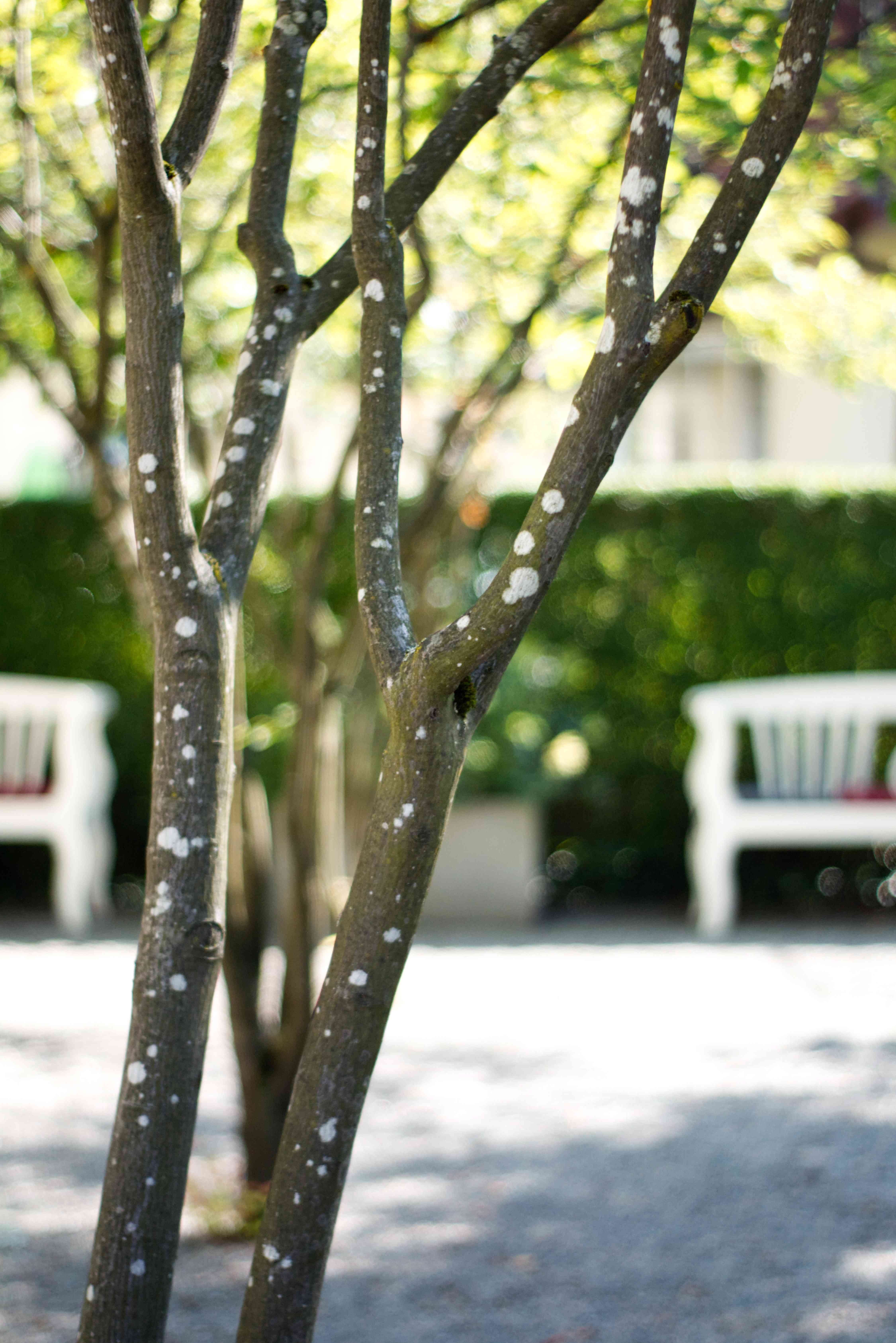 Rock pear garden of the hotel