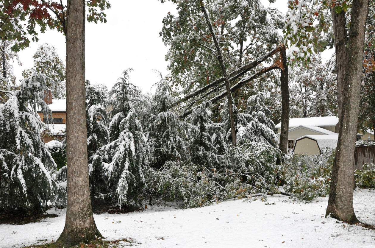 Drooping, Heavy Tree Limbs Damage Vacation Rental Properties