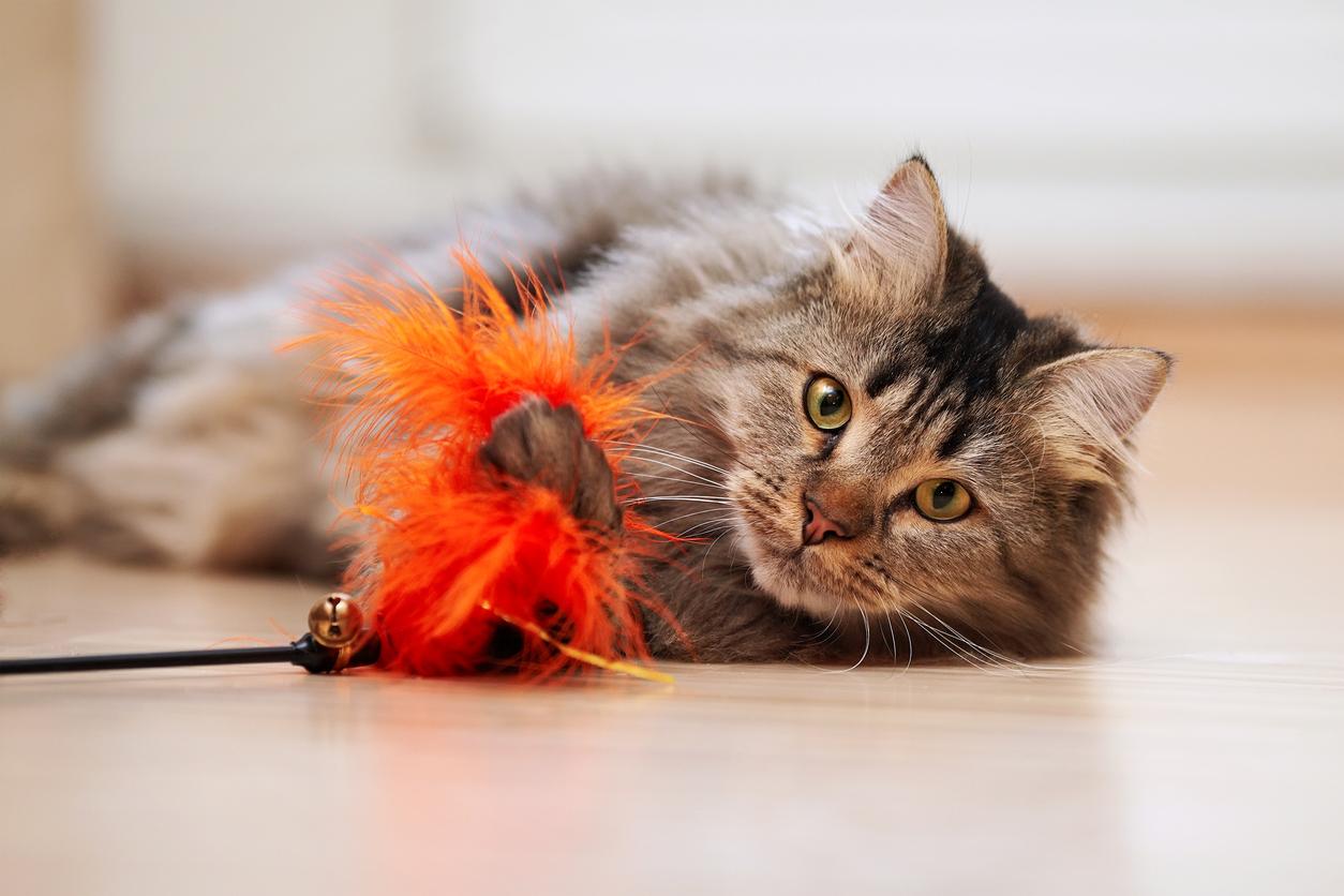 Pet Toys Prevents Vacation Rental Damage