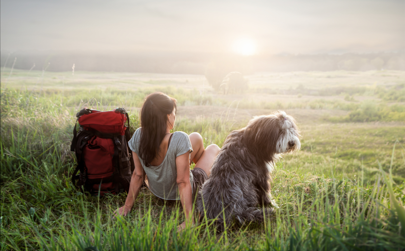 Pet-Friendly Areas Add Value to Your Vacation Rental Property