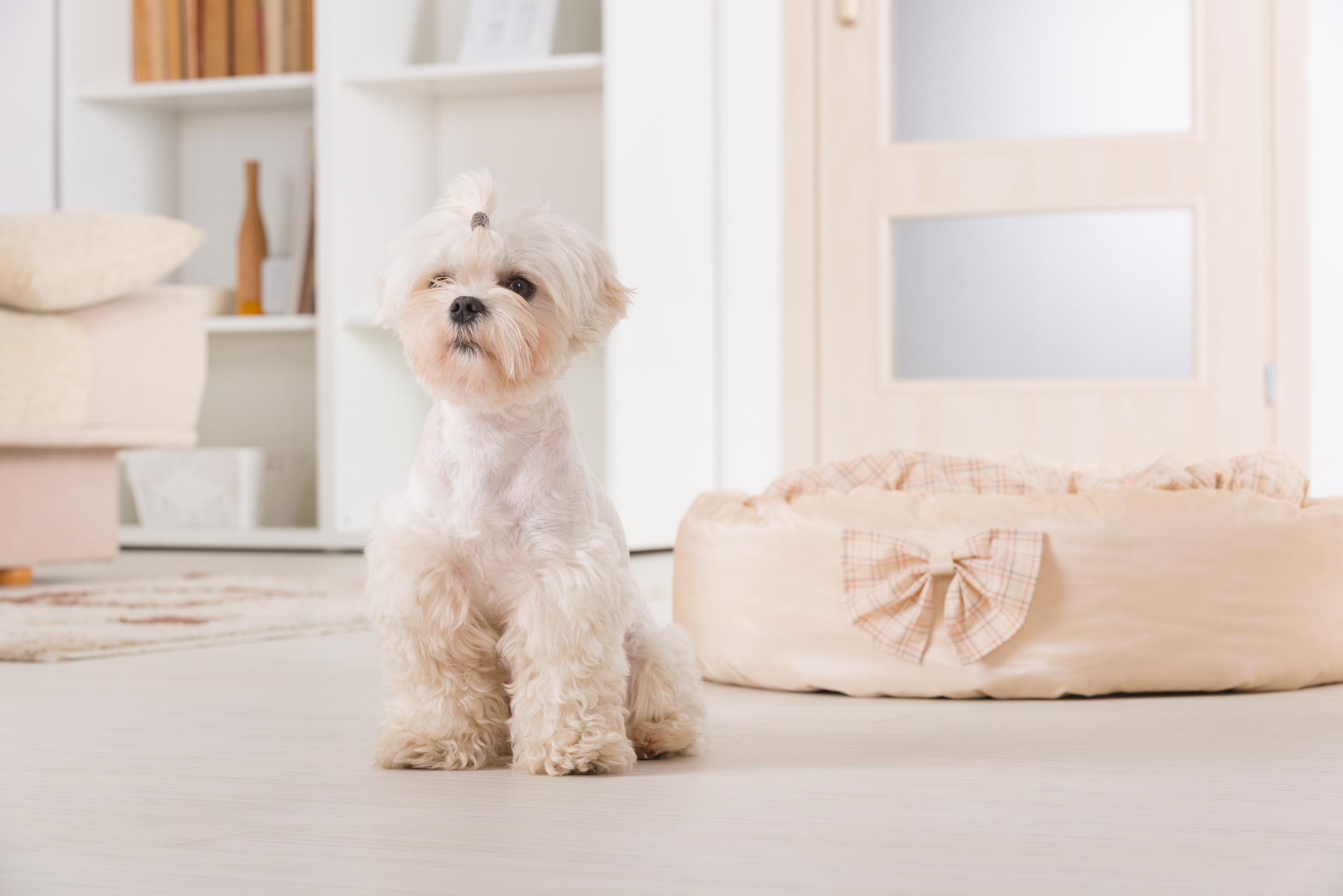 Keep Pets Off Furniture by Providing Their Own Area