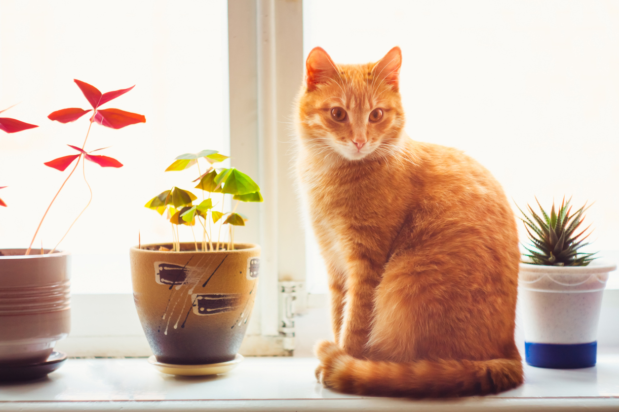 Bring Pets With You When Listing Your Weekend Rental