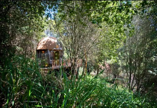 Mushroom Cabin - 7 Alternative Accommodations Airbnb Futurestay