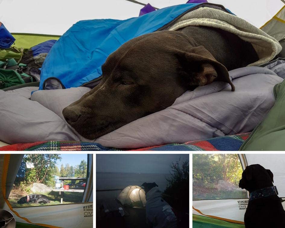 Montage photos - chien en camping