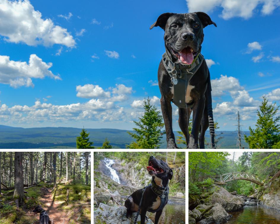 Montage photos du parc régional des Appalaches