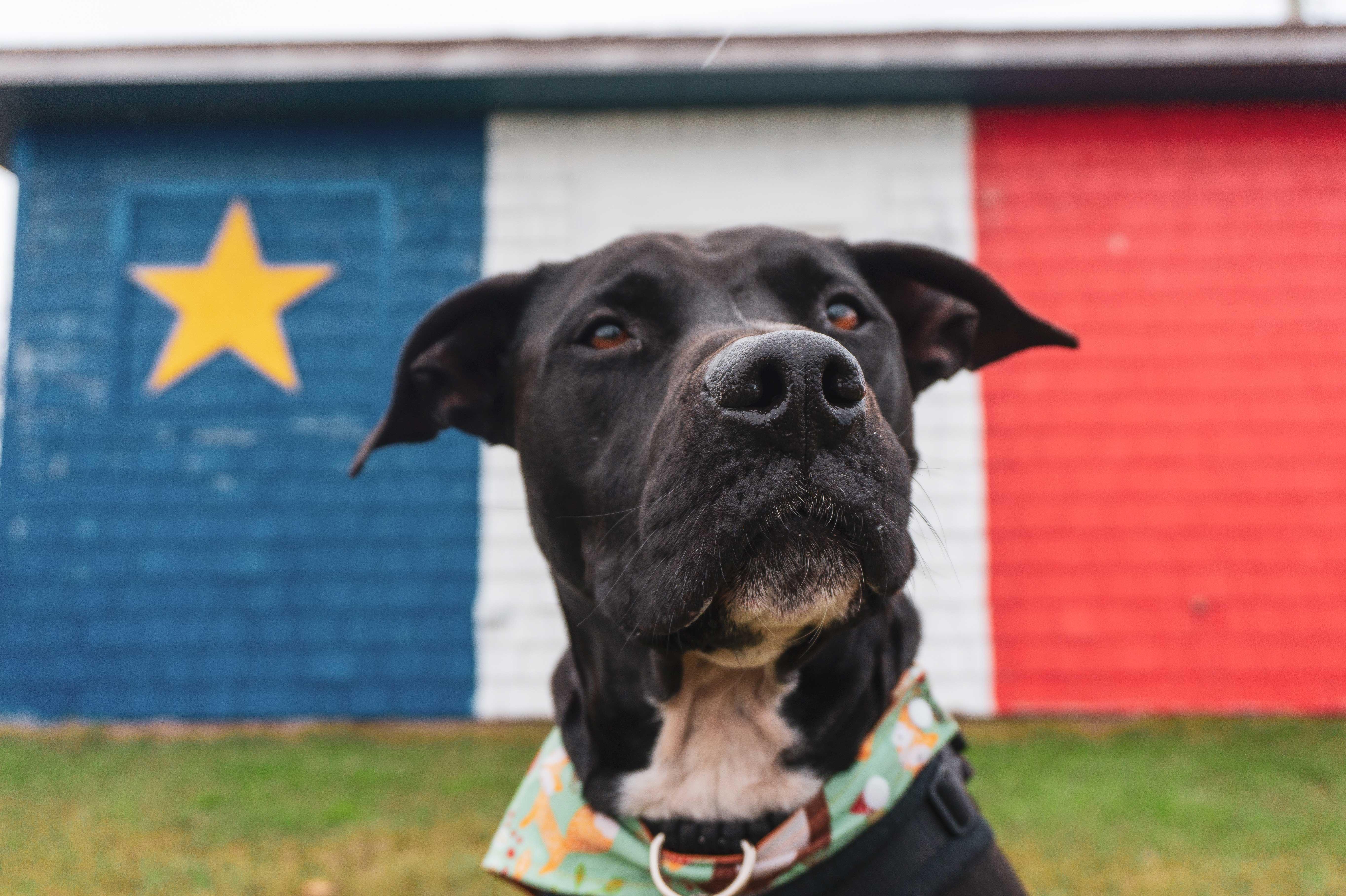 Enzo est en premier plan, il a les oreilles au vent et porte un bandana turquoise et orange. Derrière lui se trouve un bâtiment peint aux couleurs de l'Acadie.