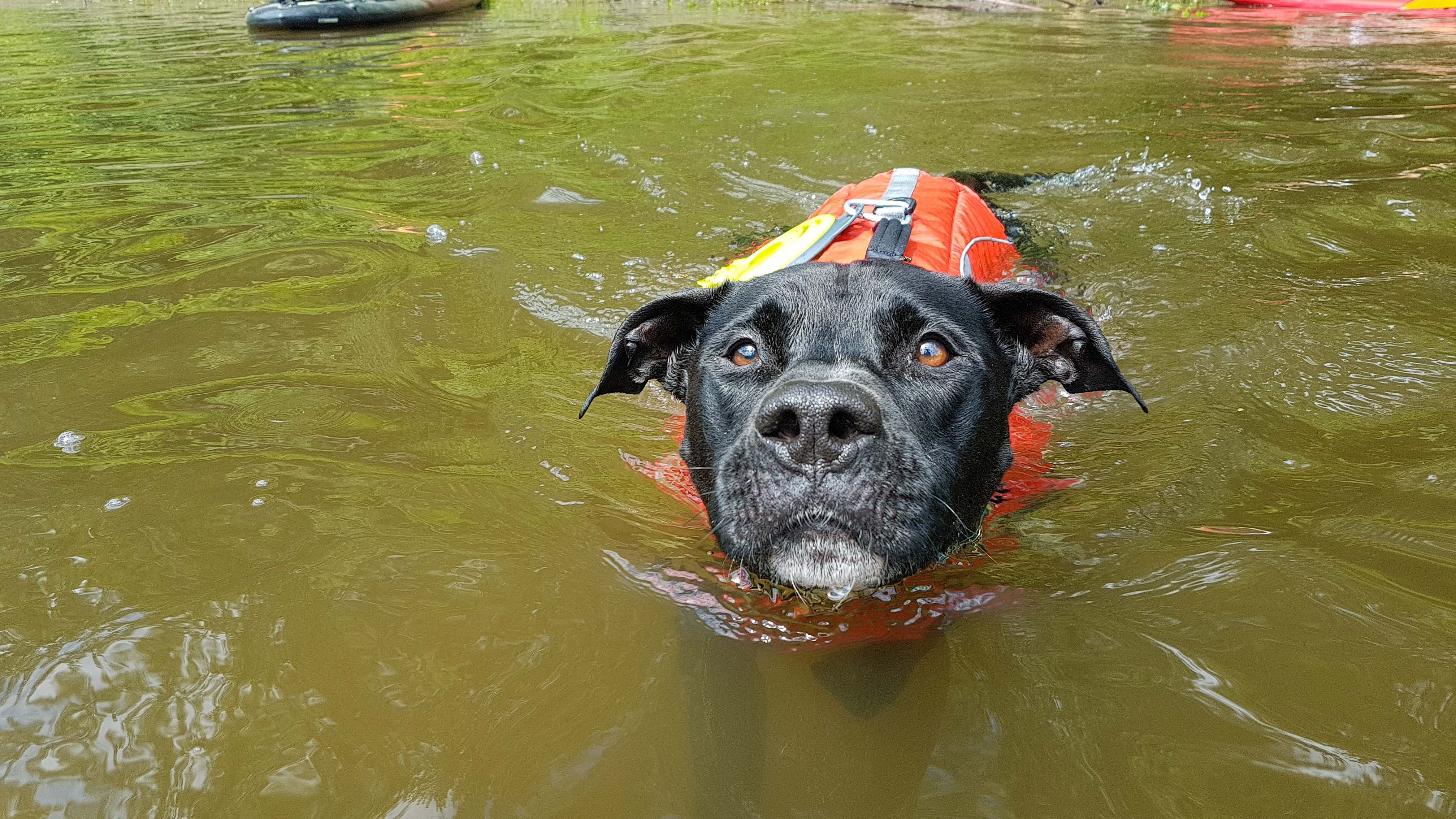 Enzo nage dans la rivière