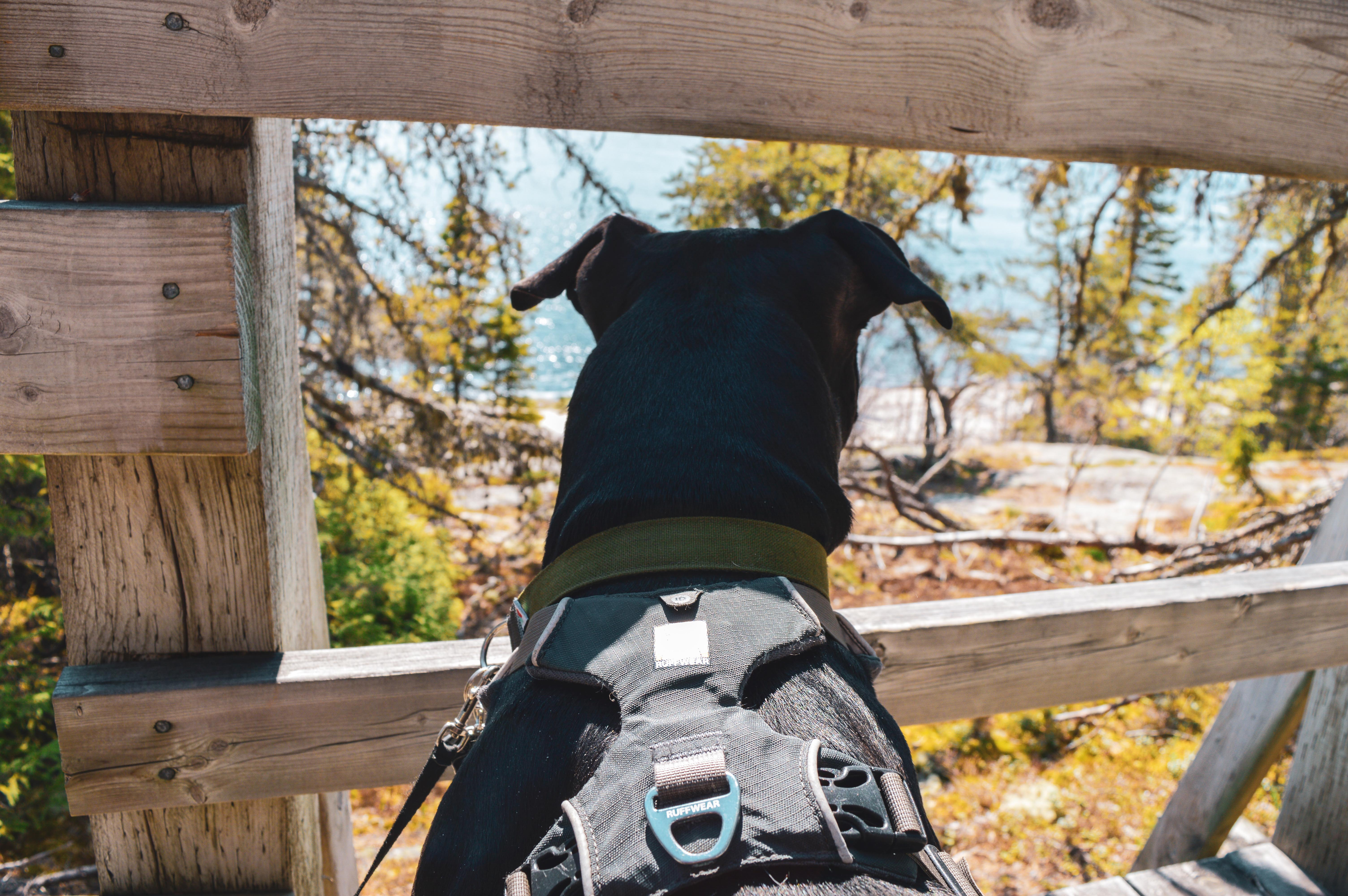 Enzo fait dos à la caméra. Il regarde la paysage entre les planches de la rambarde d'un pont en bois.