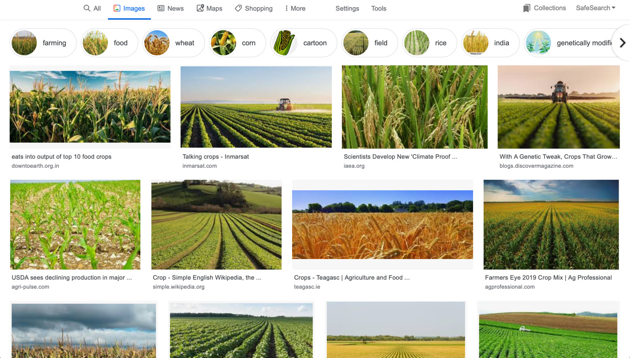 "Screenshot of Google Image search results for ""crops"""