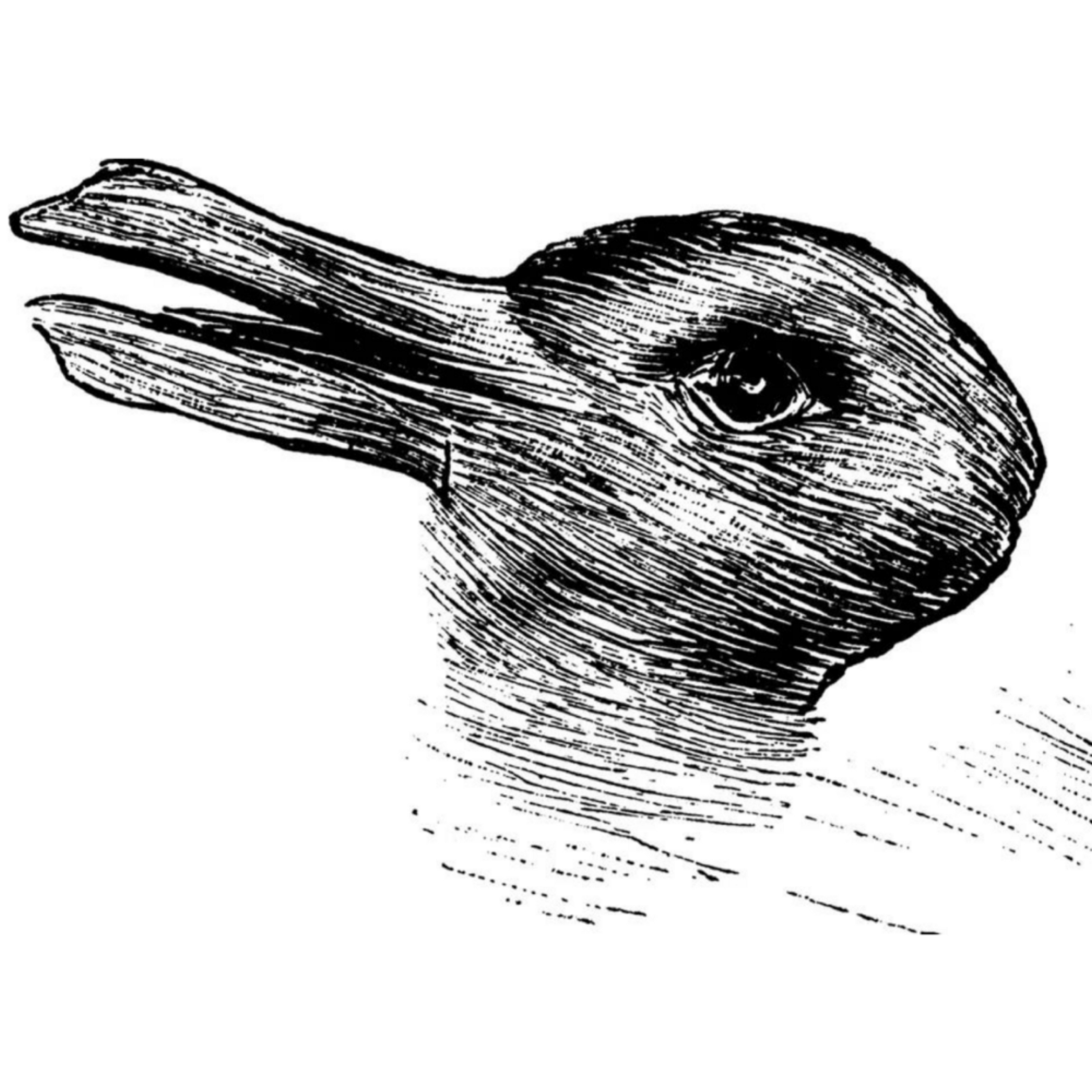 bird or rabbit optical illusion