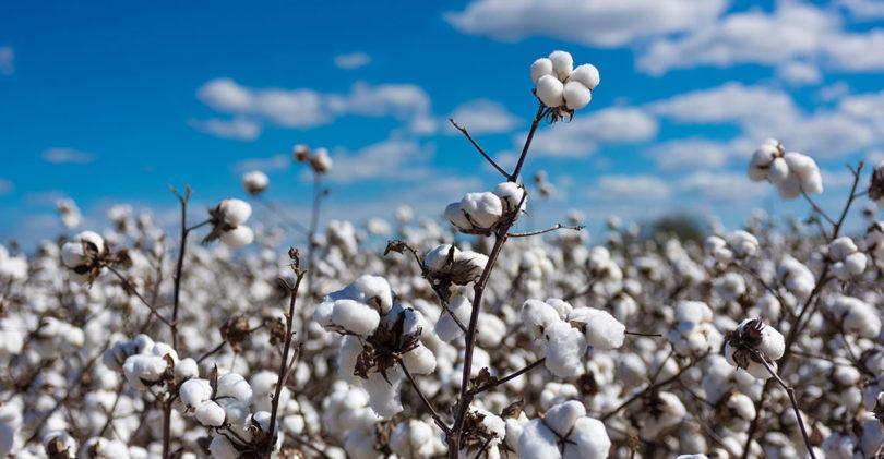 L'industrie du textile se responsabilise