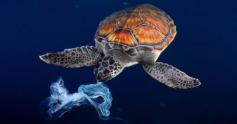 SEAQUAL™ : transformer les déchets marins en fibres recyclés