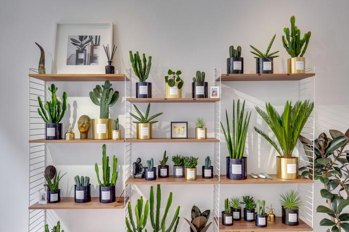 Interview By Charlot : les plantes personnalisées