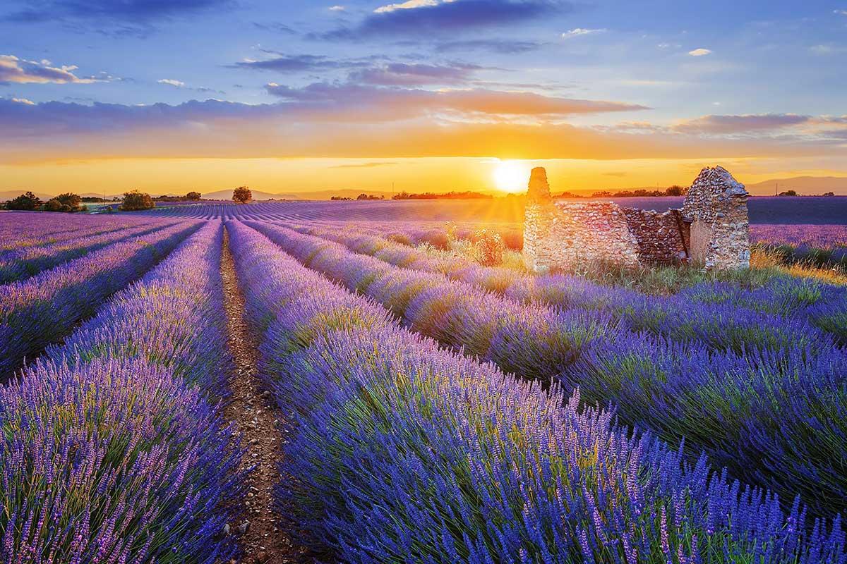 Toujours plus d'idées d'animation en EHPAD  : se cultiver en se réchauffant avec la Provence