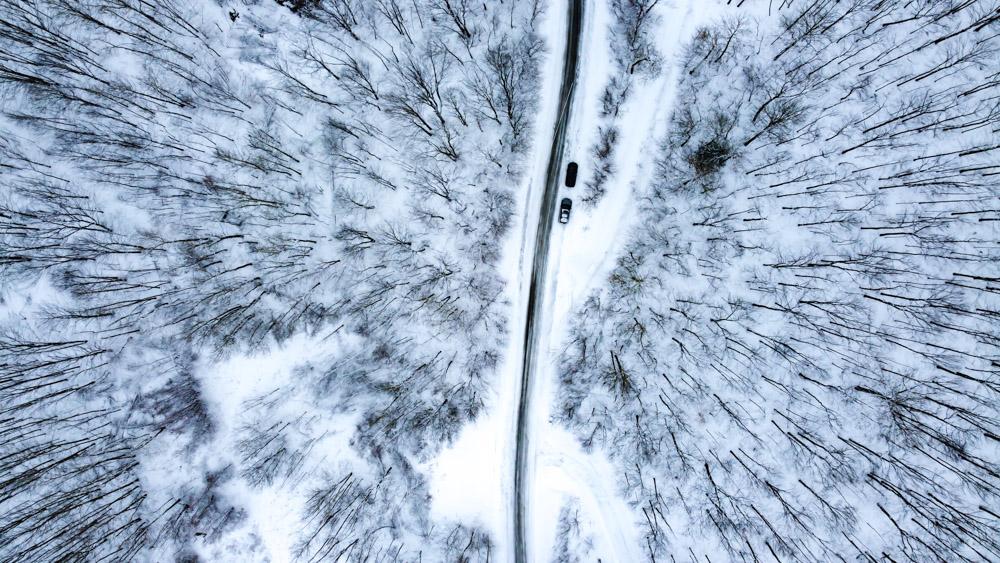 Forêt blanche