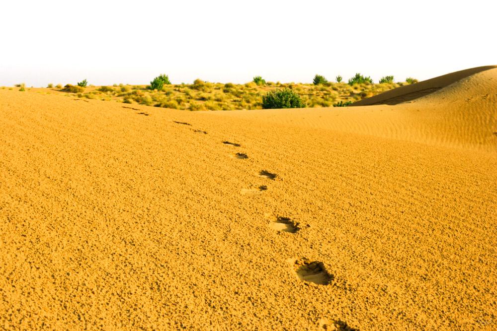 Jaisalmer - Inde - François B. pour Photo-to-go