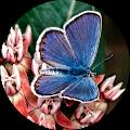 OKC Butterfly