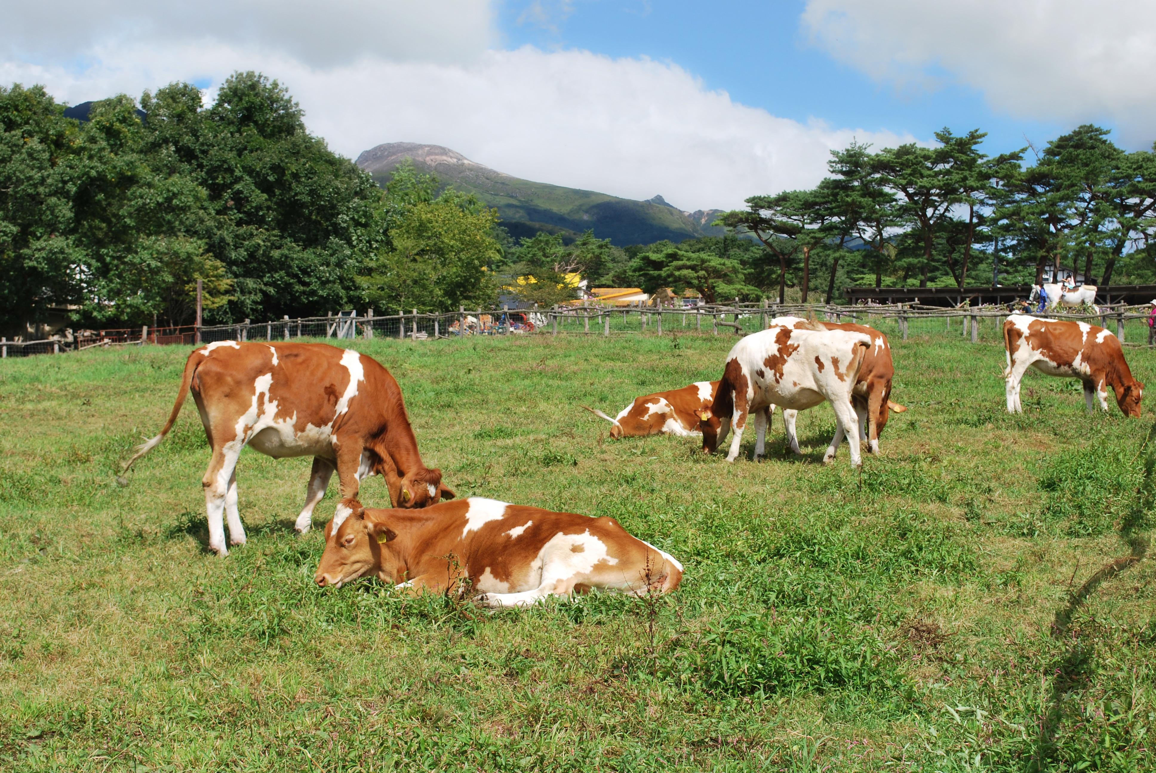 栃木県那須市にある南ヶ丘牧場におすすめデートプランをインタビュー!