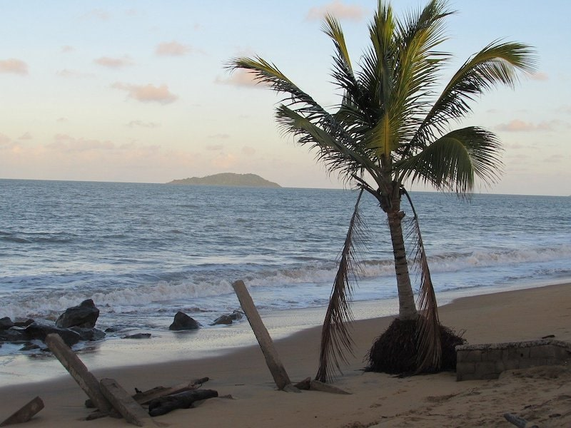 View of a palm tree on Bourda beach, along the Indian Ocean.