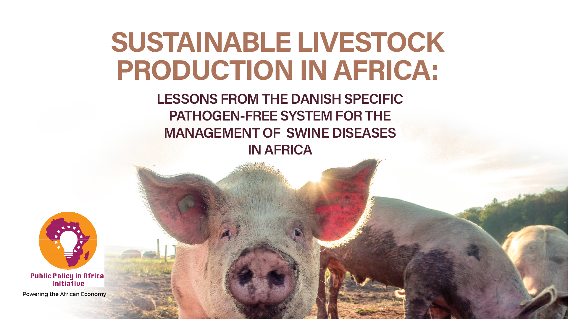 Sustainable Livestock Production In Africa: Lessons From The Danish Specific Pathogen-free System For The Management Of Swine Diseases In Africa