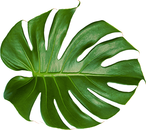 Aura Leaf