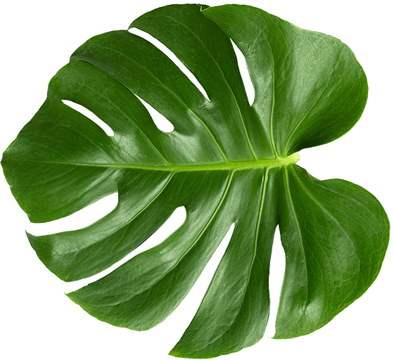 Aura Beauty Salon Brighton - Leaf Image