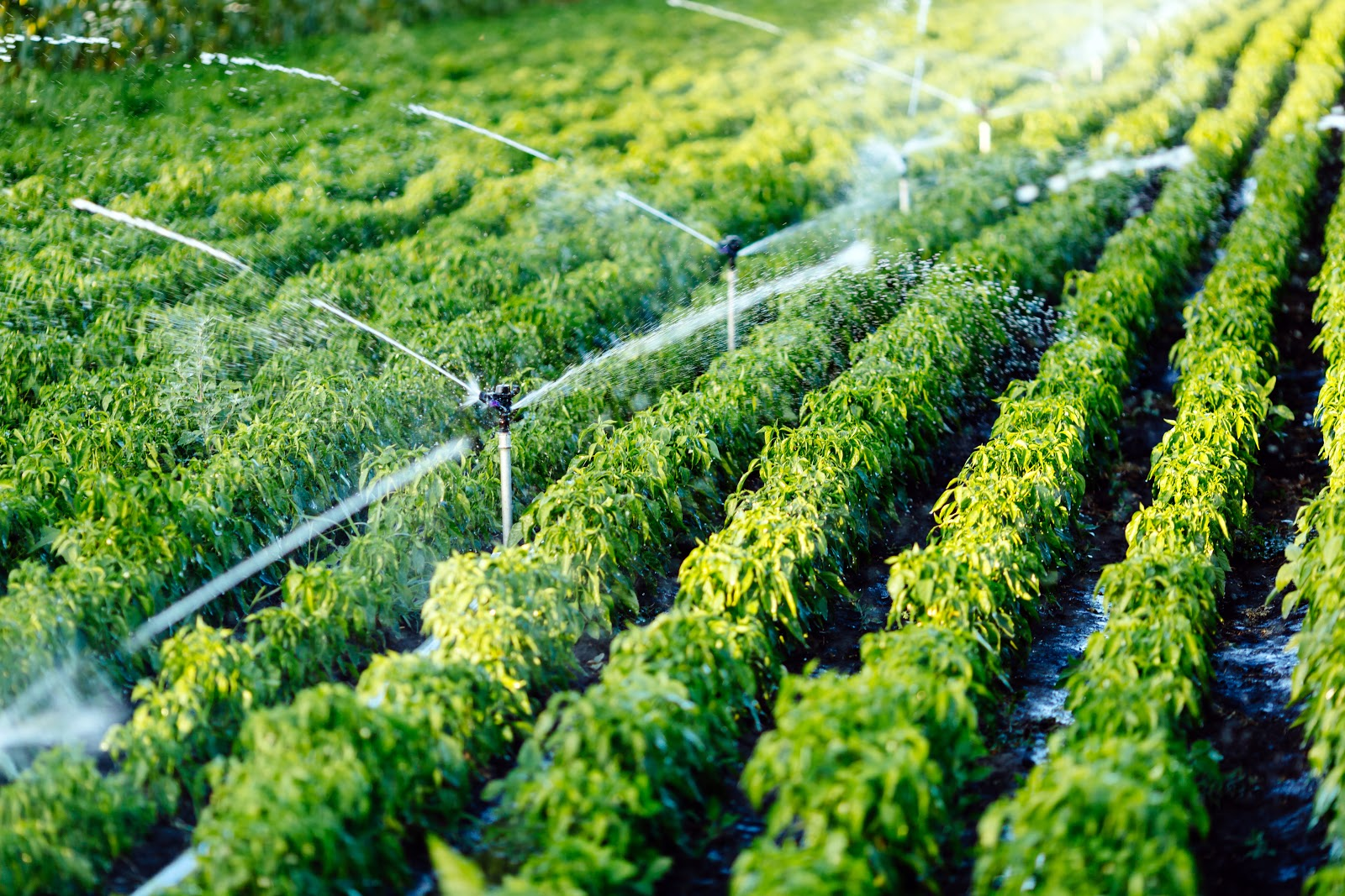 It is estimated that 70% of the world's water footprint is related to what we eat, according to the Food and Agriculture Organization of the United Nations (FAO)