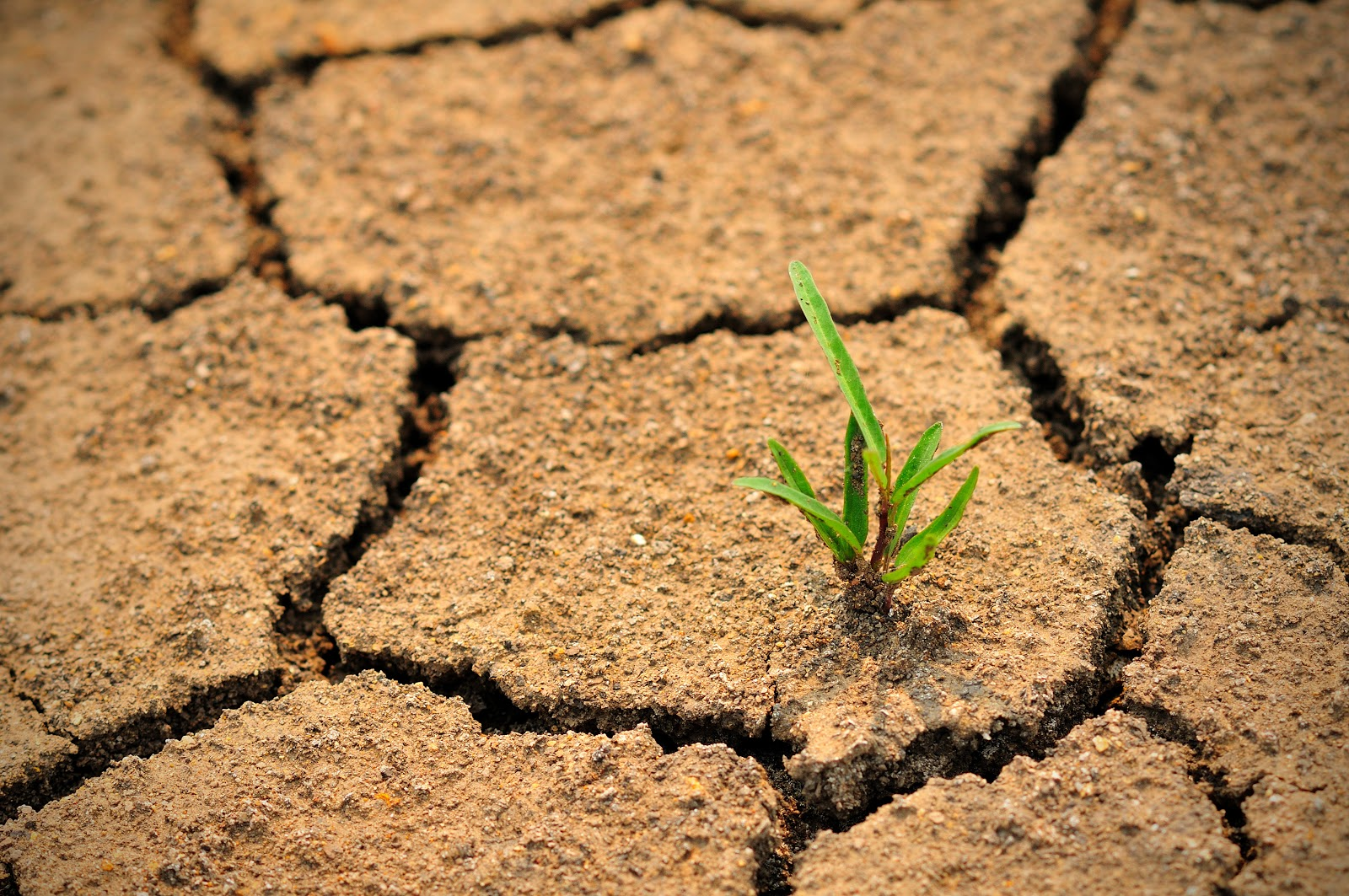 According to the IPBES is the (IPCC for biodiversity) 75% of Earth's Land Areas Are Degraded.