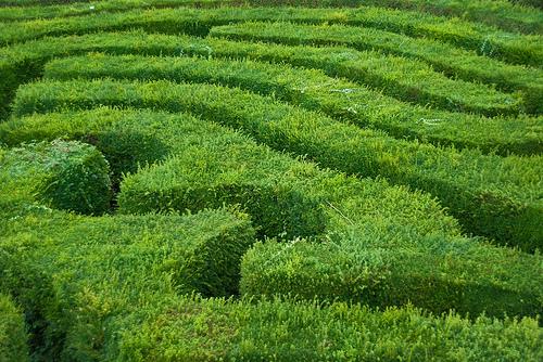 Longleat Maze by Niki Odolphie