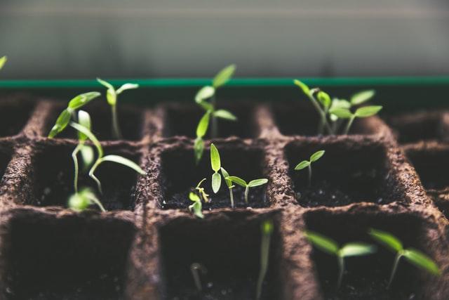 Seedlings by Markus Spiske