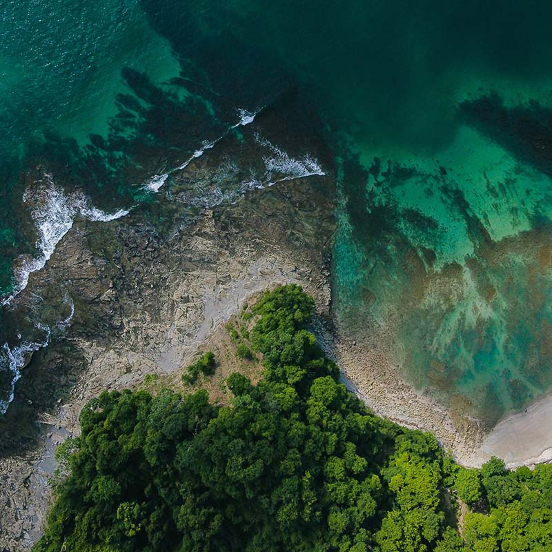 Trees, sea and coral used to depict the concept of Living Brands