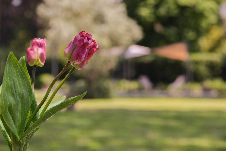 dettaglio giardino eventi