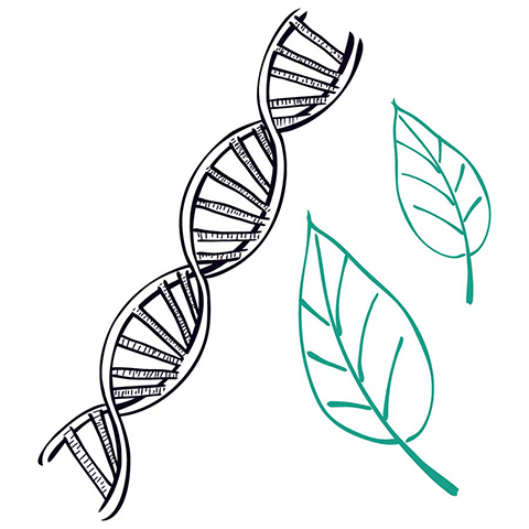 Biology illustration for course page - Dna strand and leafes