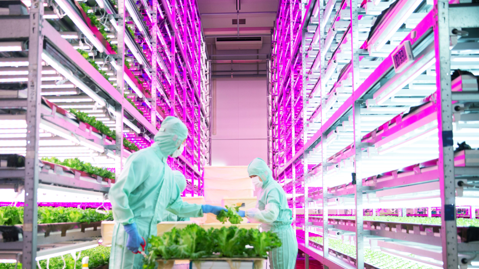 Image of man in hydroponic plant