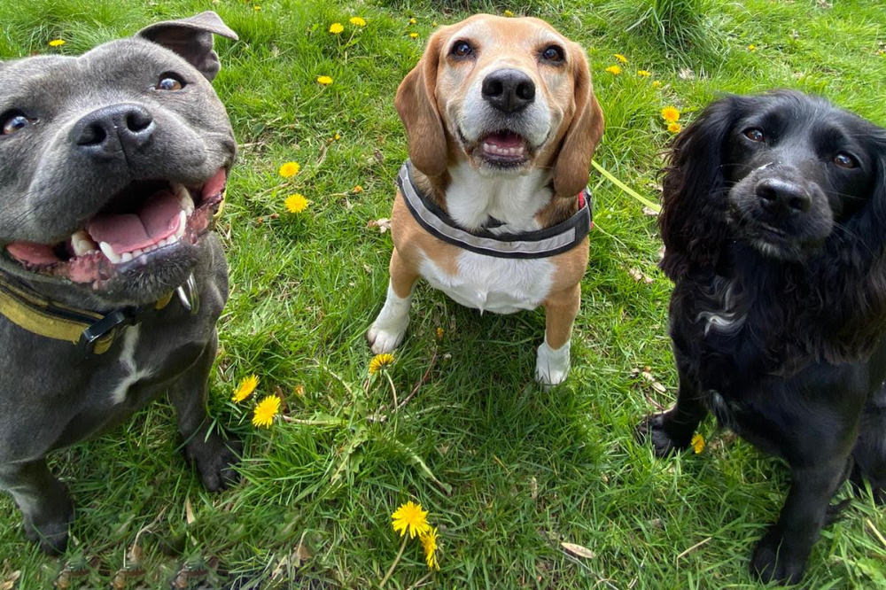 Why is socialising your dog important?