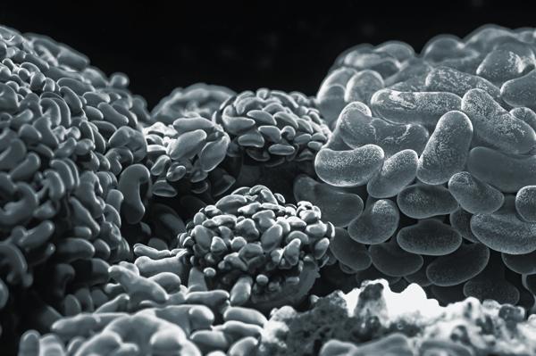 brain cells through a microscope