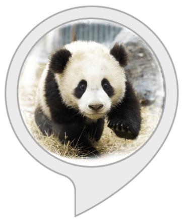 Panda Rescue Kids Game for Amazon Alexa