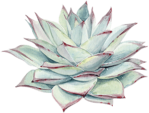 propagate your succulent leaves