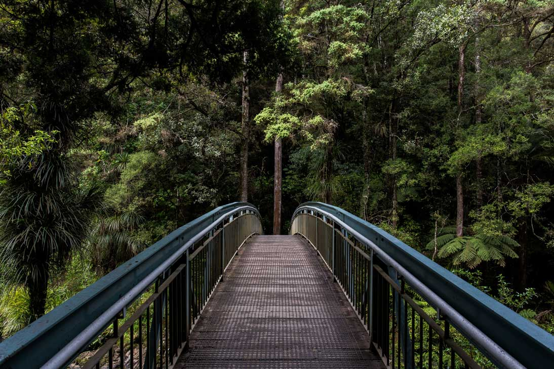 Straight wooden bridge leading into a green forest