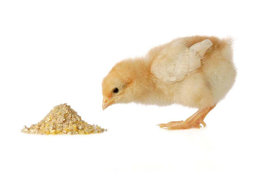 Mycotoxin Testing in the Feed Chain