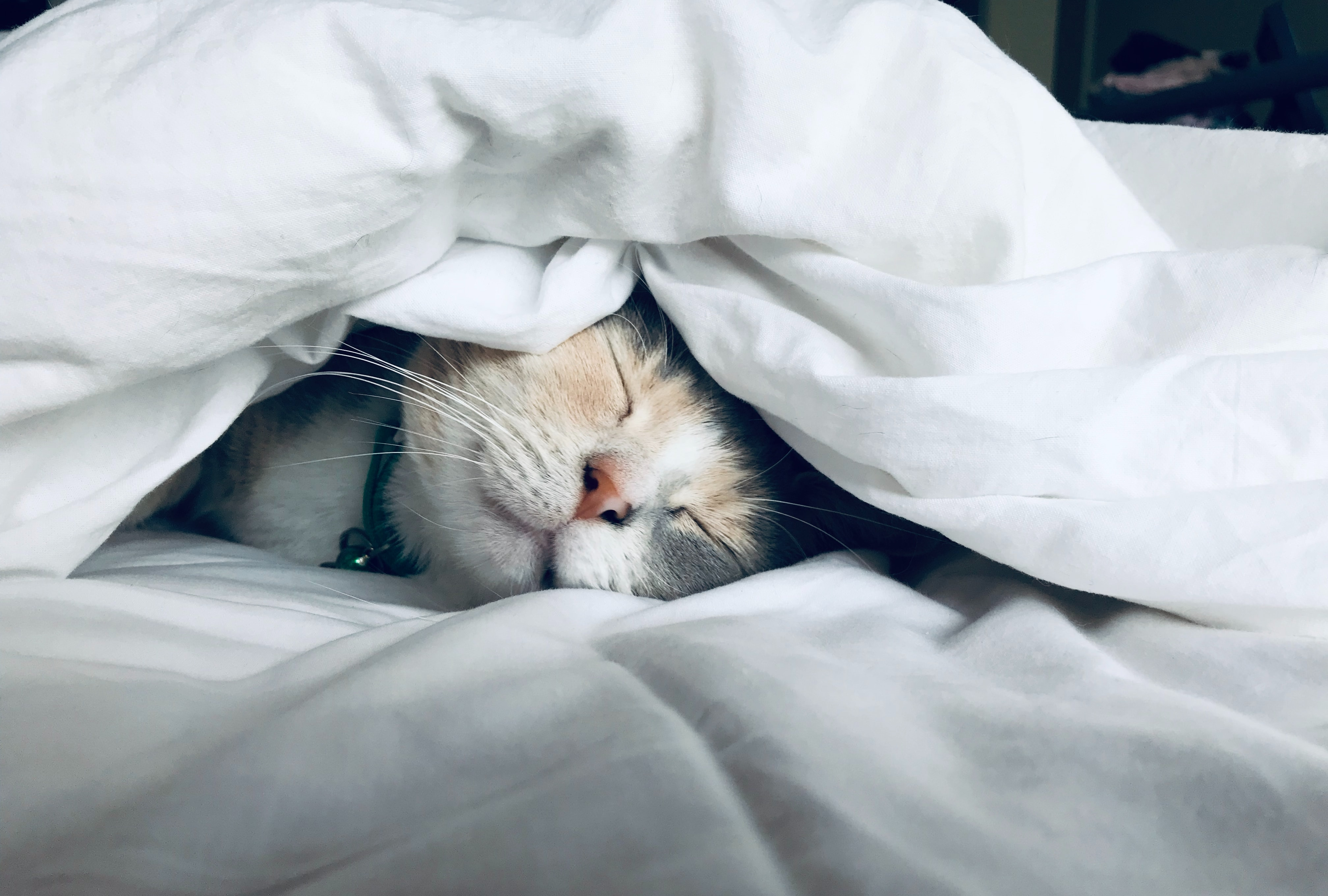 Grey cat asleep on a white bed cover