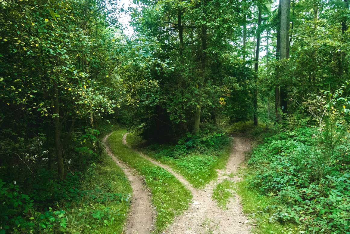 Country path dividing in two