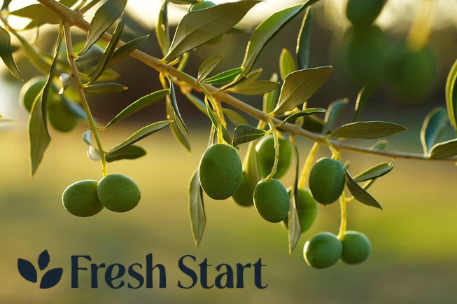 Olive tree close up with Fresh Start written in dark blue text