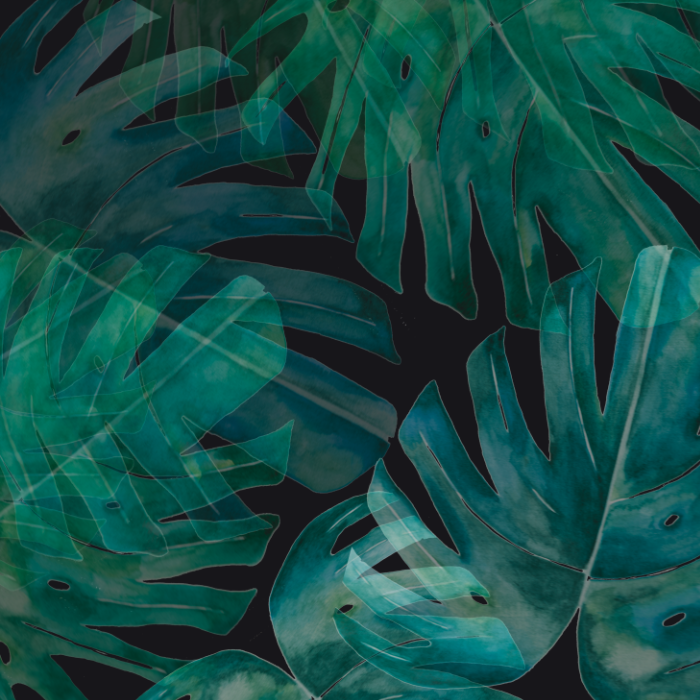 Monstera Turquoise