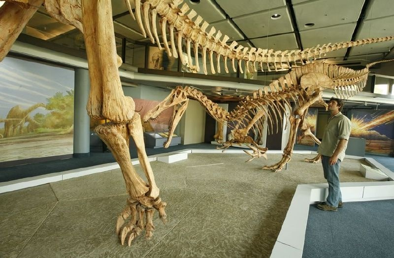 'African dinosaurs' exhibit at the Iziko South African Museum in Cape Town