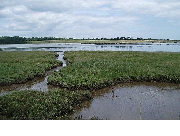 Marshland near Blythburgh. View over the tidal River Blyth