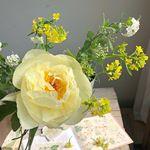 https://www.instagram.com/hummingrose